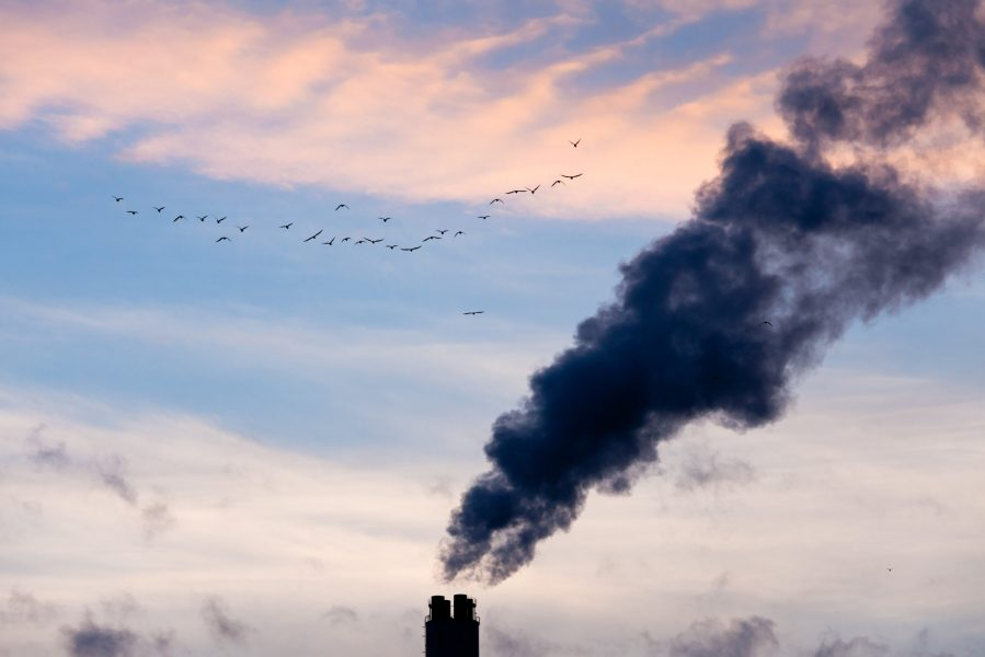 A flock of birds fly past smokestack chimneys belching black smoke and pollutants in blue evening sky.